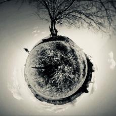 360 walking in circles tree image no shadow
