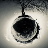 360 walking in circles tree image with shadow